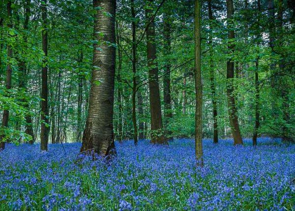 Whippendell Woods