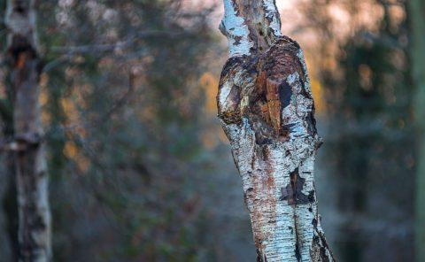Woodlands Photography - Ruislip Woodlands