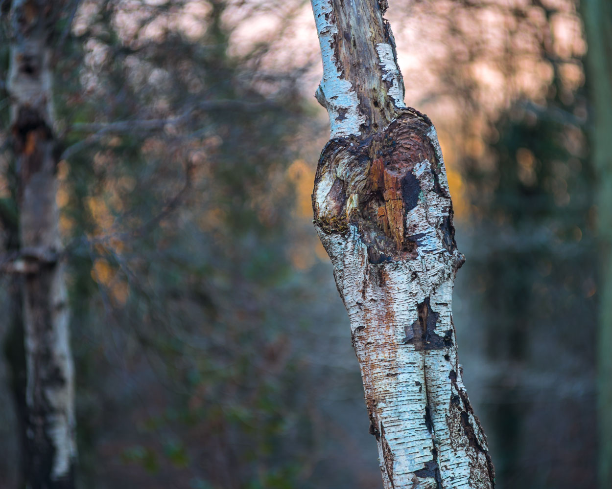 Woodlands Photography - Ruislip Woodlands
